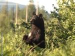 blackbearpower signed