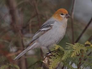 Photo taken in winter of 2011 near Nelson