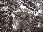 Winter canopy