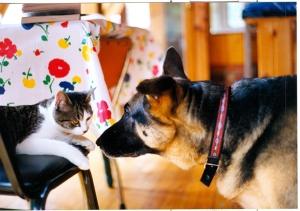 Rover meets Miska