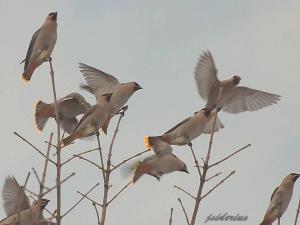taking wing