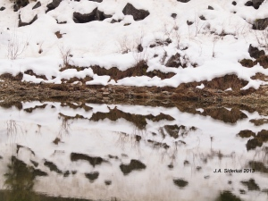 Snowy Patch Reflection