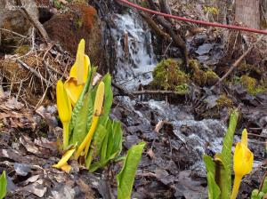 by an early spring torrent