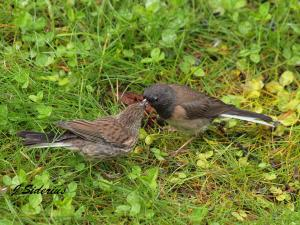hungry fledglings