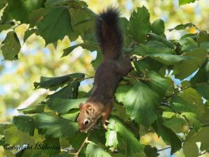 hanging by your toes - getting that hazelnut