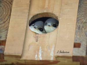 Two peeking out