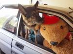 Max and Bearista