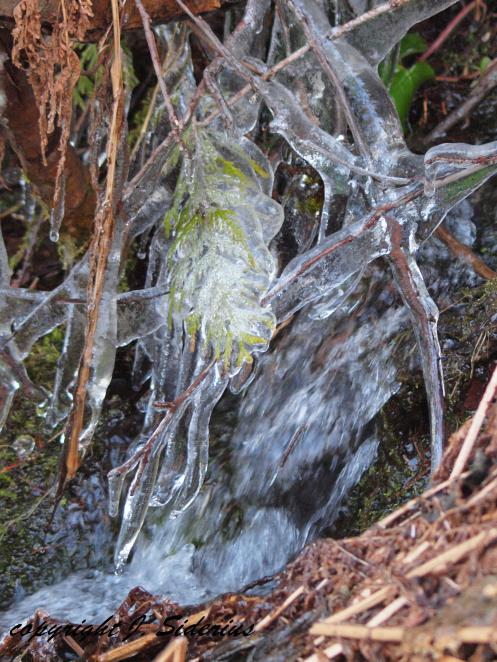 Ice and Cedar