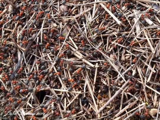 Ants busy in the warm sun