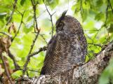 Owl on Alert