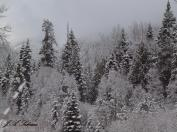 Kokanee Forest in Winter