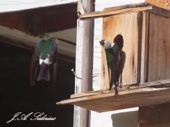Choosing a nesting box