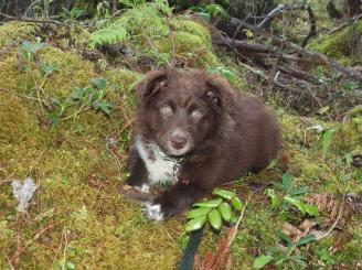 Moxie in the bush