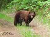 Black bear sow standing between me and her cubs