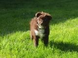 Moxie at 13 weeks